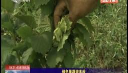 鄉村四季12316 綠色果蔬迎豐收