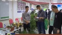 吉林省林草花卉果树种苗展销会成交种苗100多万株