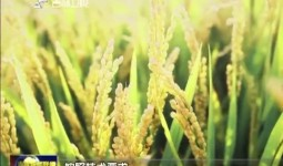 吉林新闻联播_2018-06-19