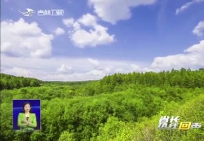 省长热线回声|通化县:守护青山绿水 造福一方百姓
