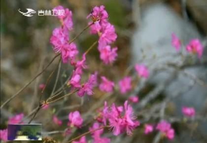 最美吉林|汪清兰家大峡谷