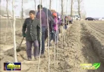 【全民共建 绿美吉林】农安:农田防护林构筑绿色生态屏障