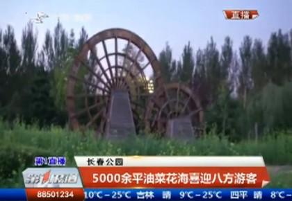 第1报道|长春公园5000余平油菜花海喜迎八方游客