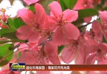 通化市海棠園:海棠花開風光美
