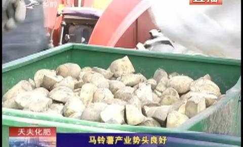 乡村四季12316_马铃薯产业势头良好