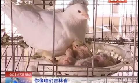 乡村四季12316_超乎想象的鸽子(上)