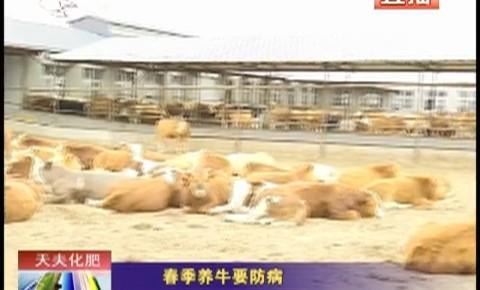乡村四季12316_春季养牛要防病