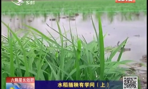 乡村四季12316_水稻插秧有学问(上)