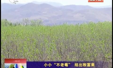 """乡村四季12316_小小""""不老莓"""" 结出致富果"""