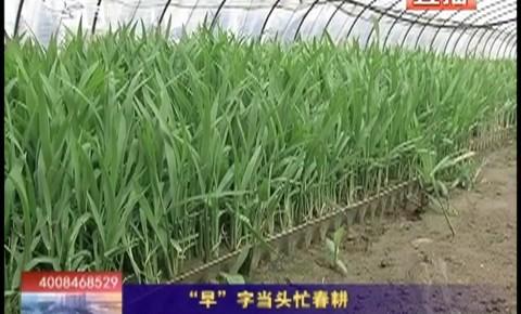 """乡村四季12316_""""早""""字当头忙春耕"""