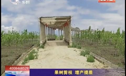 乡村四季12316_果树剪枝 增产提质