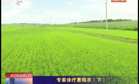 乡村四季12316_专家诊疗惠稻农(下)
