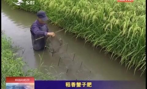 乡村四季12316|稻香蟹子肥