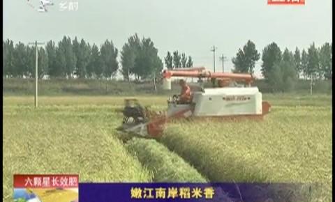 乡村四季12316|嫩江南岸稻米香