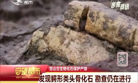 延吉龙山古生物化石保护产地发现鳄形类头骨化石
