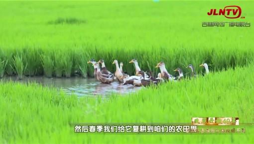 吉林省县域巡礼微视频系列|稻乡舒兰 两代人一捧米