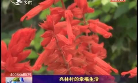 乡村四季12316|兴林村的幸福生活