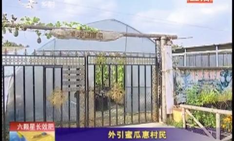 乡村四季12316|外引蜜瓜惠村民