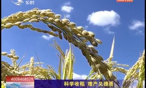 乡村四季12316|科学收稻 增产又提质