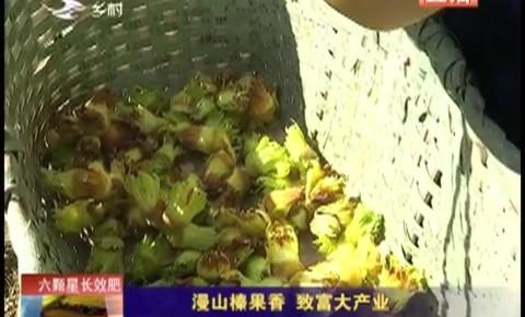 乡村四季12316|漫山榛果香 致富大产业