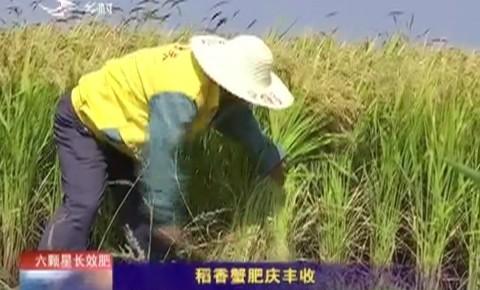 乡村四季12316 稻香蟹肥庆丰收
