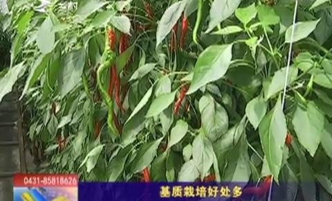 乡村四季12316 基质栽培好处多