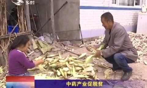 乡村四季12316|中药产业促脱贫
