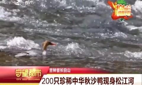 长白山200只珍稀中华秋沙鸭现身松江河