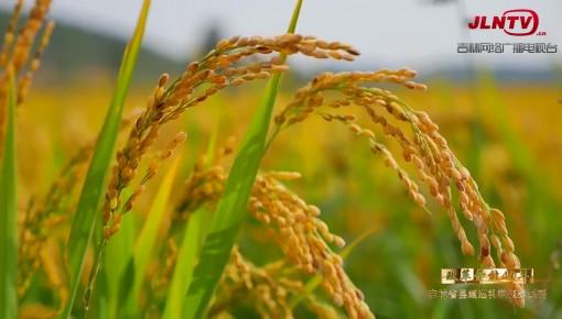 吉林省县域巡礼微视频系列|辽河之源·东辽 打造现代生态农业