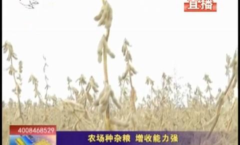 乡村四季12316|农场种杂粮 增收能力强