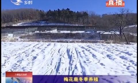 鄉村四季12316|梅花鹿冬季養殖
