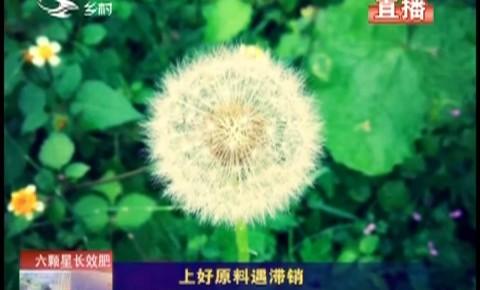 乡村四季12316|靖宇县上好蒲公英根茶原料遇滞销