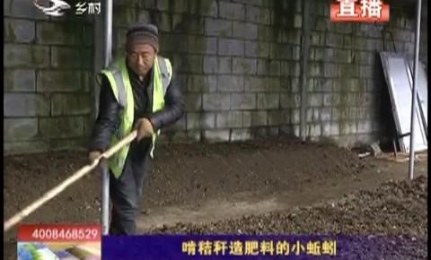 乡村四季12316|啃秸秆造肥料的小蚯蚓