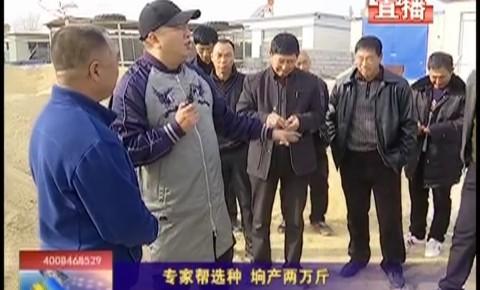 乡村四季12316|专家帮选种  垧产两万斤