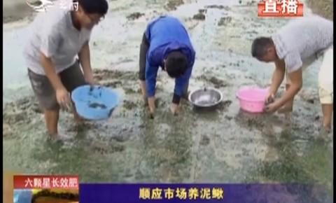 乡村四季12316|顺应市场养泥鳅