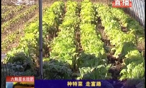 乡村四季12316|种特菜 走富路