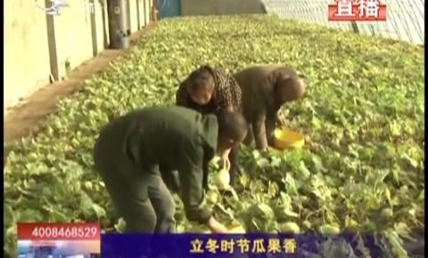 乡村四季12316|大安市立冬时节瓜果香
