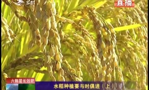 乡村四季12316|水稻种植要与时俱进(上)