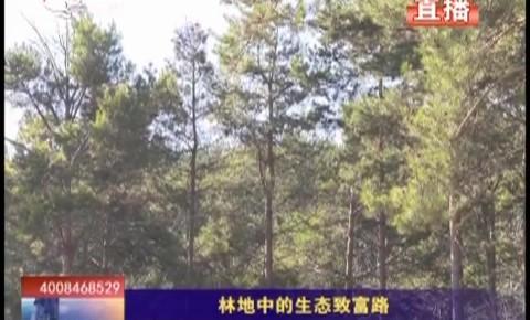乡村四季12316|蛟河市林地中的生态致富路