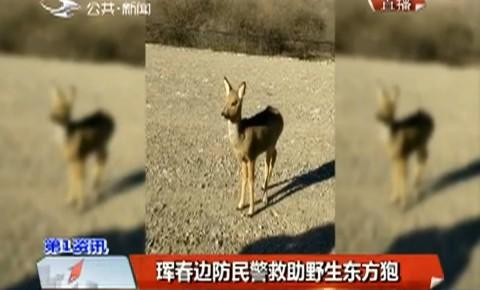 第1报道|珲春边防民警救助野生东方狍