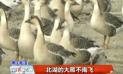 第1报道|北湖的大雁不南飞