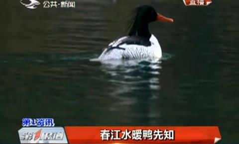第1报道|春江水暖鸭先知