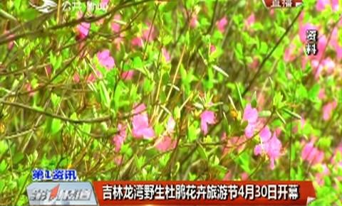 第1报道丨万博手机注册龙湾野生杜鹃花卉旅游节4月30日开幕