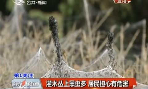 第1报道|灌木丛上黑虫多 居民担心有危害