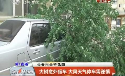 第1报道|大树意外砸车 大风天气停车需谨慎