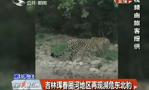 第1报道|吉林珲春圈河地区再现濒危东北豹