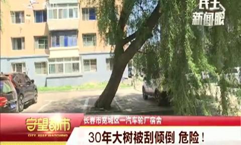 守望都市|30年大树被刮倾倒 危险!