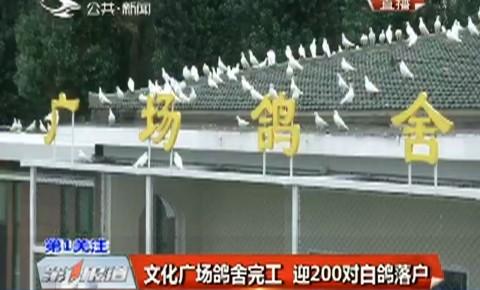 第1報道|文化廣場鴿舍完工 迎200對白鴿落戶