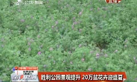 第1报道 胜利公园景观提升 20万盆花卉迎盛夏