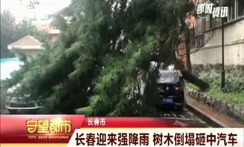 守望都市 长春迎来强降雨 树木倒塌砸中汽车